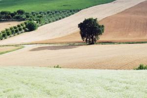 Pazienza, fatica e saggezza hanno modellato un territorio antico; i campi bene arati, le messi e i vigneti, la quercia e l'ulivo sono meraviglie di cui godere con calma. (foto Marcello Tramandoni)